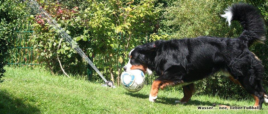 lieber_fussball