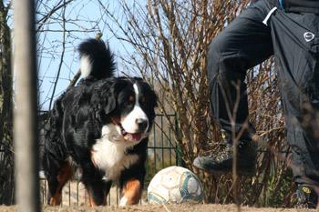 Ich habe einen Fußball gefunden. Max spielst Du mit mir?