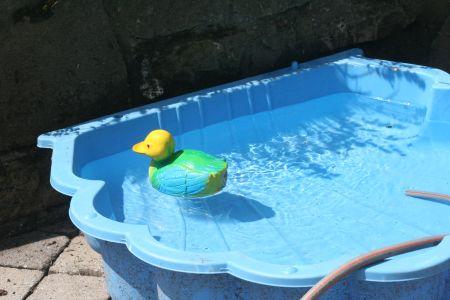 Ente schwimmt